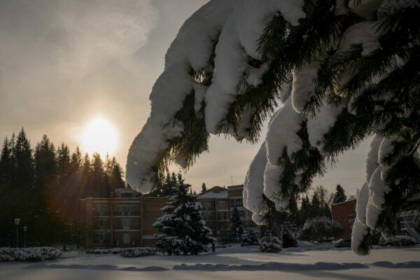 Зима в Виктории 1